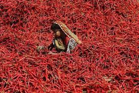 فلفل قرمز هندی