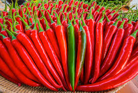 فروش و بازار تولید فلفل قرمز تازه هندی