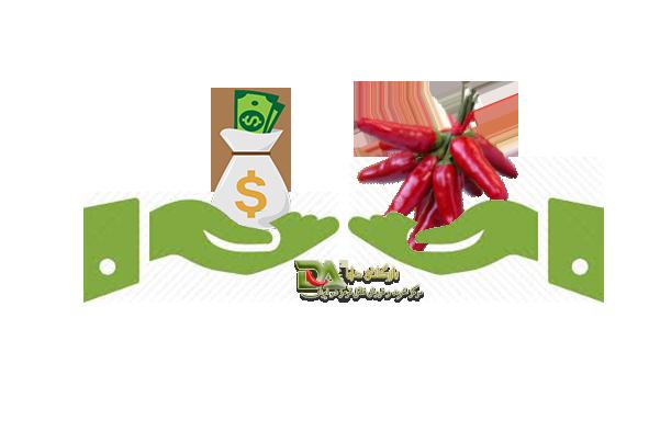 خرید و فروش نقدی فلفل قرمز