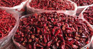 صادرات تندترین فلفل قرمز