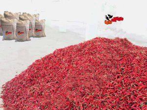 قیمت فروش روز فلفل قرمز