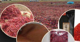 عرضه مستقیم انواع فلفل قرمز فله و بسته بندی