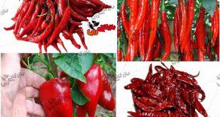 تامین فلفل قرمز از سراسر ایران